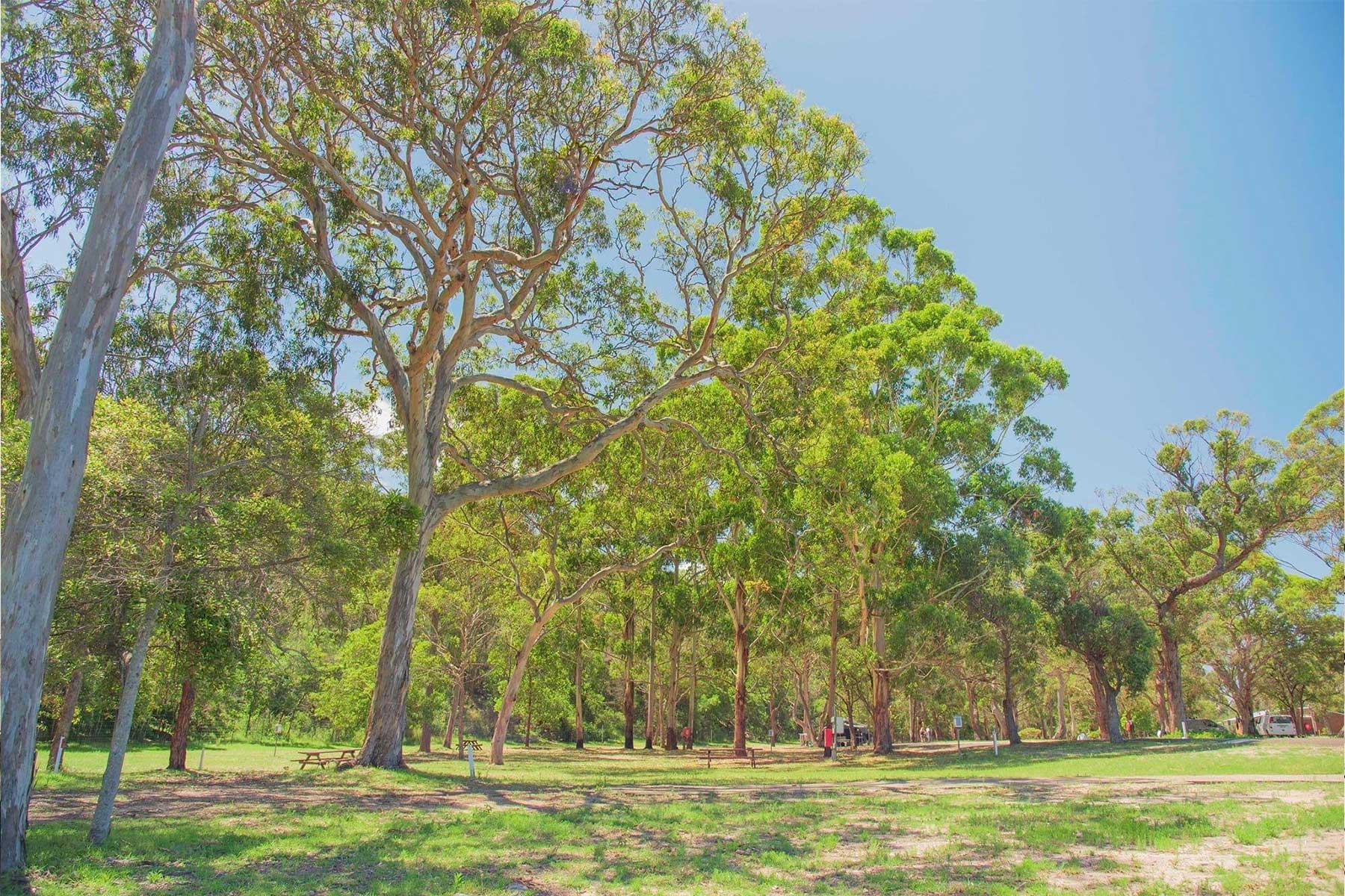 Beachfront Caravan Sites - Accommodation - Cabins- Glamping - Camping - Caravan Park - Tathra Beachside Eco Camp - NSW Sapphire, South Coast